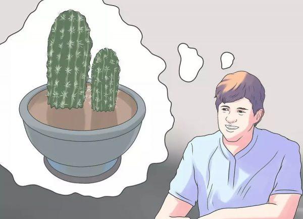 kak-peresadit-kaktus-3 jpg