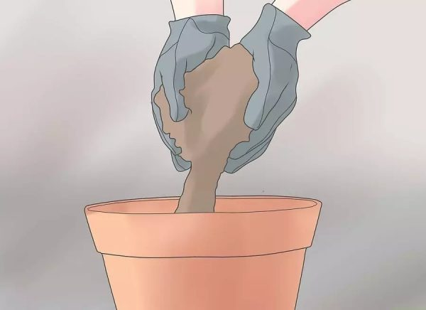 kak-peresadit-kaktus-4-7 jpg
