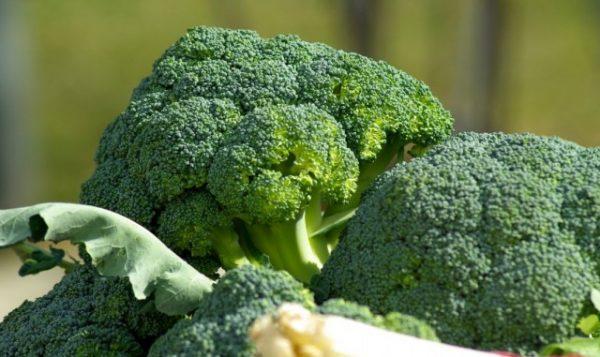 Как вырастить брокколи на даче: все секреты успешного урожая