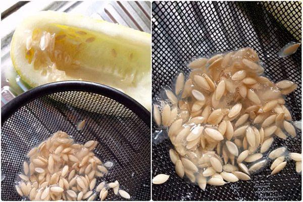 Как собрать и сохранить семена в домашних условиях