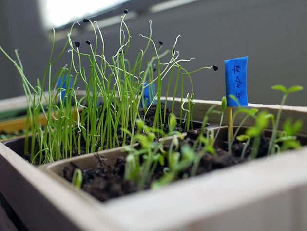 green windowsill1b
