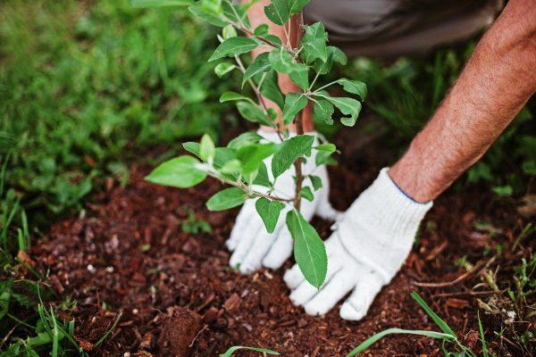 Планируете плодовый сад? Не допустите эти 10 ошибок! | Посадка деревьев,  Садовые деревья, Сад