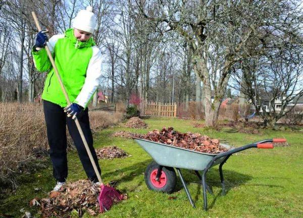 Садовые работы в марте. Как подготовить сад к весне? - archidea.com.ua