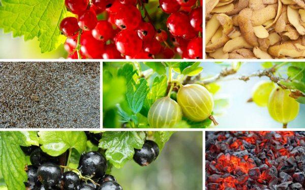 Чем подкормить смородину и крыжовник осенью | Осень, Растения, Огород