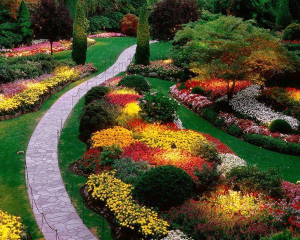 Низкорослые цветы для клумб: название, описание и фото многолетних, двулетних и однолетних цветущих растений