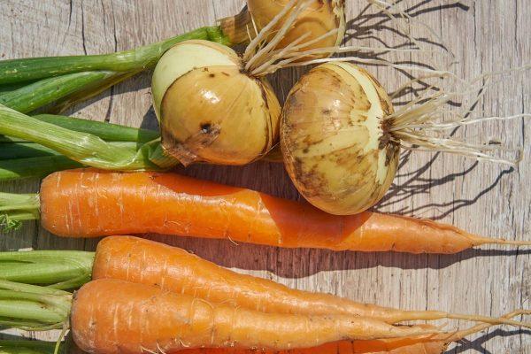 почему вянет морковь на грядке
