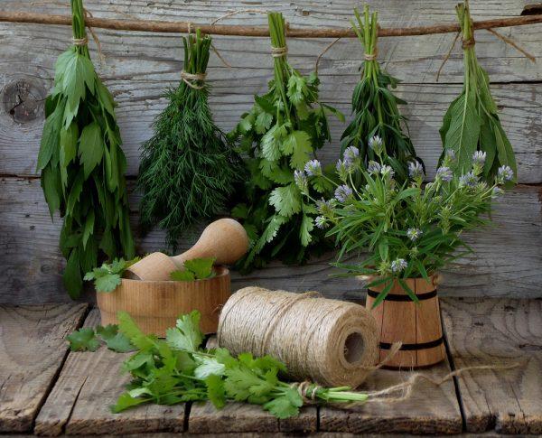 Заготовка зелени разными способами на зиму – хозяйкам на заметку