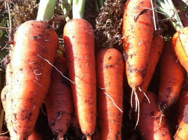 "Купить Семена моркови Абако F1 (1.8-2.0 мм) \ Abaco F1 Seminis 1000 000  семян в интернет - магазине ""Фермер Профессионал"""