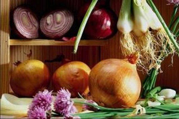 Король корнеплодов лук польза и вред для здоровья - Журнал огородника  Agrotehnika36.ru