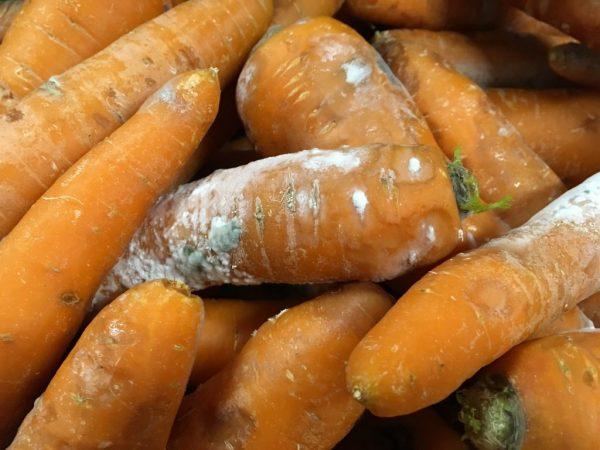 Гниль моркови при хранении
