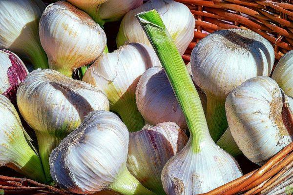garlic 12 result 1536x1024 result