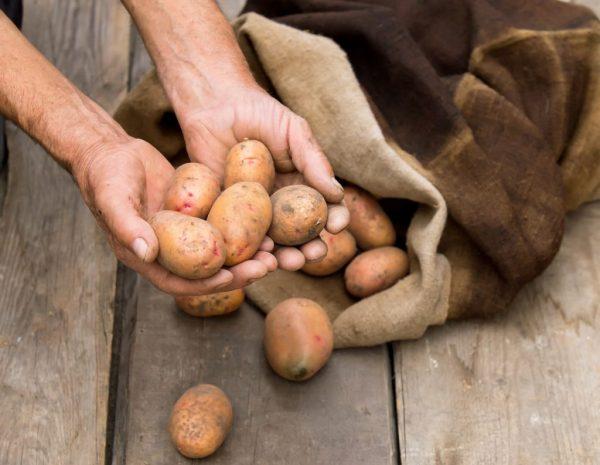 hranenie kartofelya