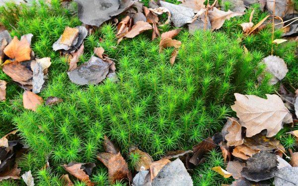 Есть вопрос: что такое мох сфагнум и для чего он нужен? | Дела огородные ( Огород.ru)