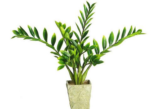 Оригинальные и привлекательные комнатные растения